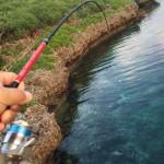 宮古島の朝釣り