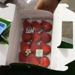 地元のイチゴ農園