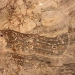 本日国会内にて衆院第五委員室前にいると、魚模様(うちのスタッフはウツボでは?)の大理石を発見。