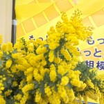 幸せカラーの黄色いミモザをたくさん持ってきてくださいました!