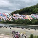 第32回 泳げ鯉のぼり相模川